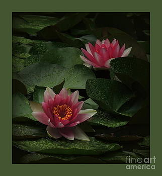 Waterlily Among Raindrops  2 by Kim Doran