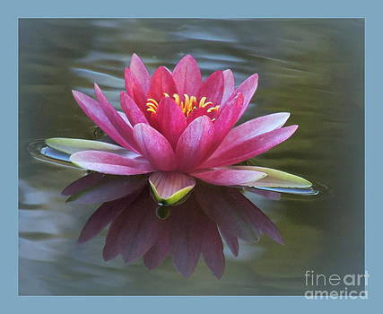 Waterlily Blue Effects by Kim Doran