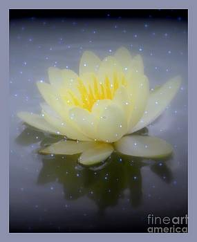 Waterlily Magic by Kim Doran