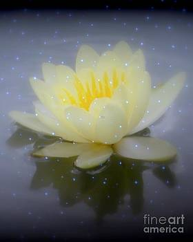 Waterlily Magic...no border by Kim Doran