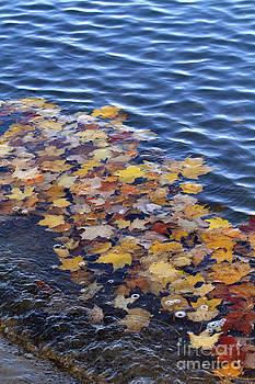 Wave of Fall Leaves by Kathy DesJardins