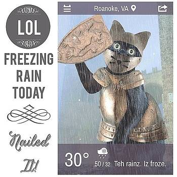 Weather Whiskers App Has A New Little by Teresa Mucha