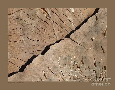 Weathered Willow Wood by Patricia Overmoyer
