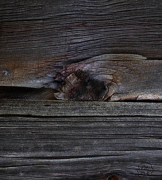 Weathered Wood - Dusk by Patricia Kay