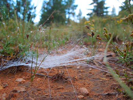 Web Morning Dew by Donna Jackson