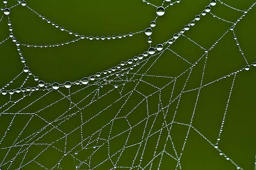 Web of Dew by Dave Weth