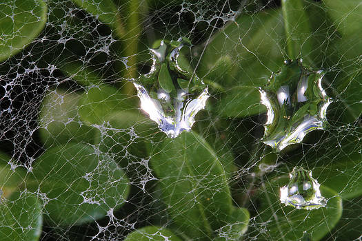 Web Rain by David Yunker