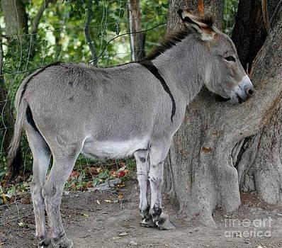 Gail Matthews - Wee Donkey