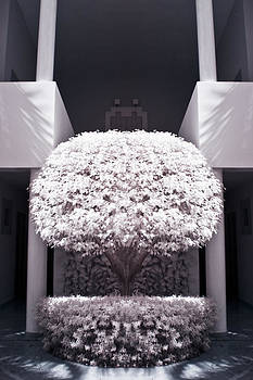 Adam Romanowicz - Welcome Tree Infrared
