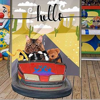 Well, Hello! New Kitty In The by Teresa Mucha