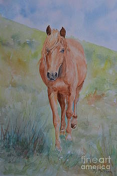 Welsh Pony by Betty Mulligan