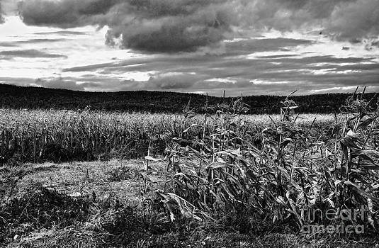 Kathleen K Parker - West Virginia Cornfield in Fall black and white