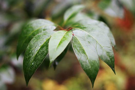 Wet Leaves by David Schoenheit