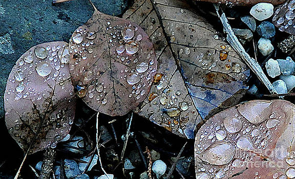 Artist and Photographer Laura Wrede - Wet Leaves