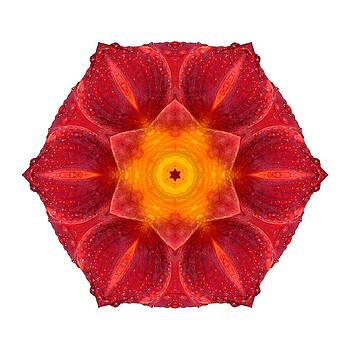 Wet Lily I Flower Mandala White by David J Bookbinder