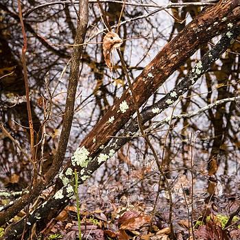 Frank Winters - Wet Wintery Woods