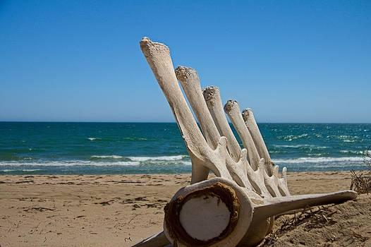 Whale Bones on the beach by Robert Bascelli