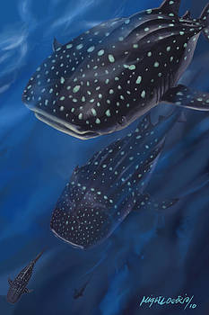 Whale Sharks by Miguel Osorio