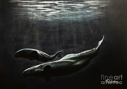 Whales by Tylir Wisdom