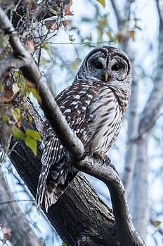 What a Hoot by Linda Dyer Kennedy