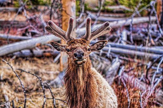 What Are You Looking At by Stormy Wilson