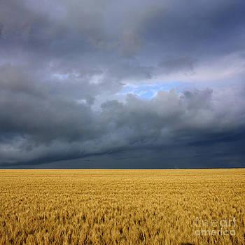 BERNARD JAUBERT - Wheat field under a overcast. Auvergne. France.