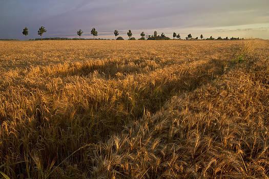 Debra and Dave Vanderlaan - Wheat Fields in France