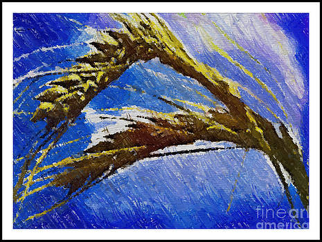 Wheat from Galica by Arif Zenun Shabani