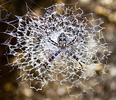 Wheel Weaving spider by Debbie Cundy