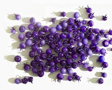 Barbara McMahon - When I Grow Old I Will Wear Purple