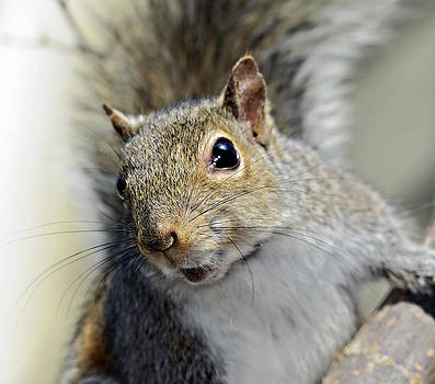 Where Are the Nuts by Susan Leggett