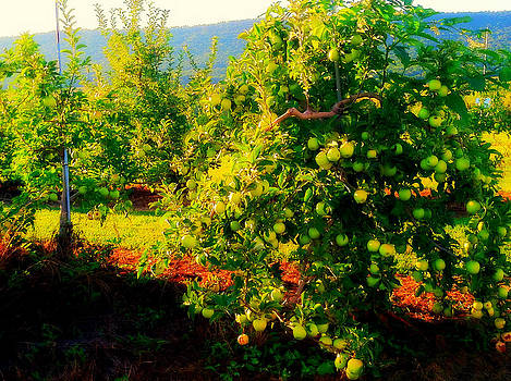 Where the Green Apples Grow by Tanya Renee Herb