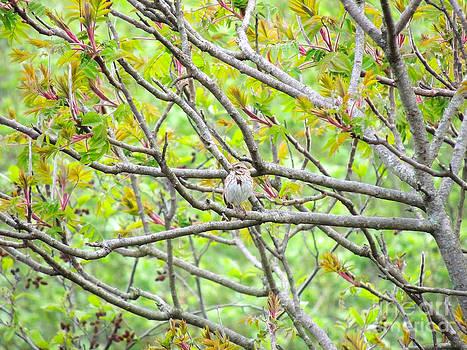 Where's Waldo Bird by Pamela Rivera