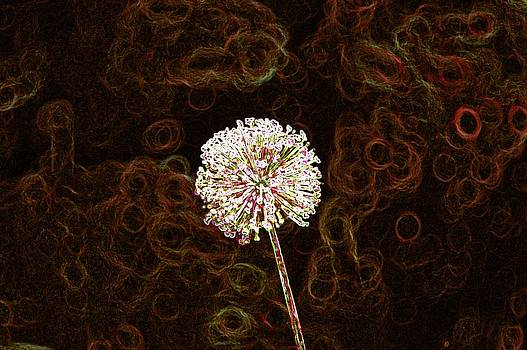 Whispered Wish by Jill Moran