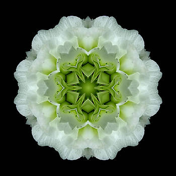 White and Green Begonia Flower Mandala by David J Bookbinder