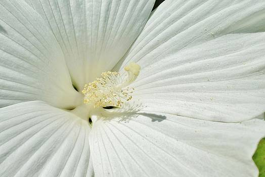 White and Shadow by Jean Goodwin Brooks