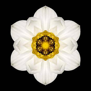 White and Yellow Daffodil Flower Mandala by David J Bookbinder