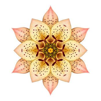 Asiatic Lily II Flower Mandala White by David J Bookbinder