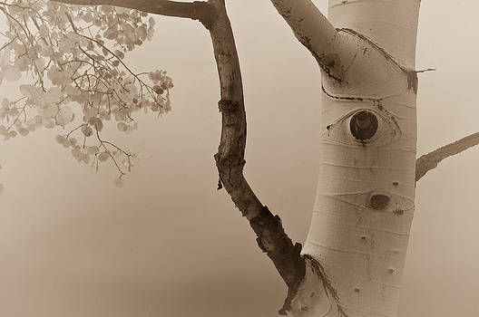 White Aspen by Daniel Huerlimann