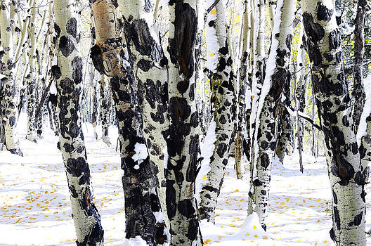 White Autumn by The Forests Edge Photography - Diane Sandoval
