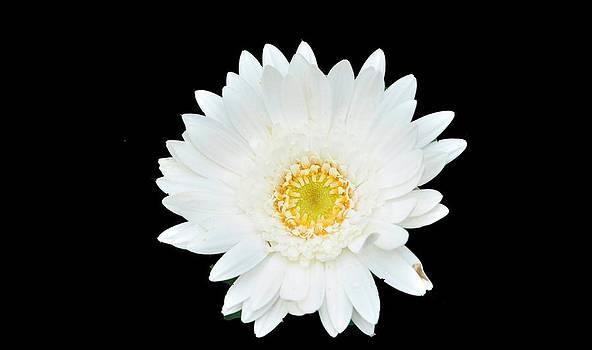White by B Thottoli