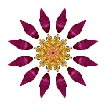 Beach Rose IV Flower Mandala White by David J Bookbinder