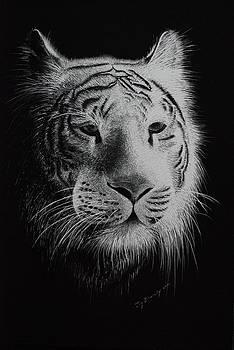 White Bengal Tiger by Joy Bradley