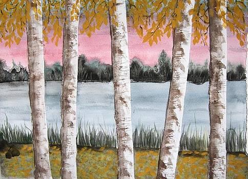 White Birch by Chip Picott