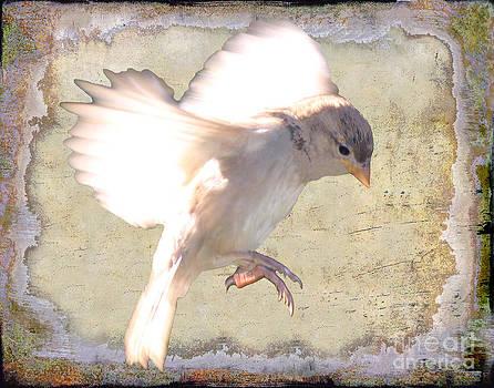 White bird by Jim Wright