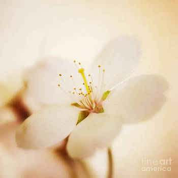 LHJB Photography - White blossom