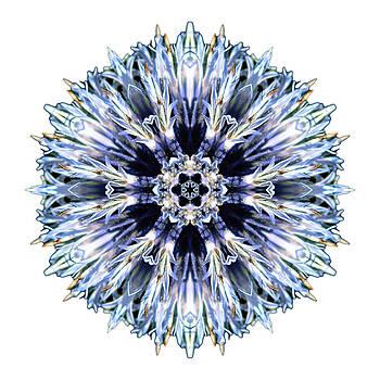 Blue Globe Thistle I Flower Mandala White by David J Bookbinder