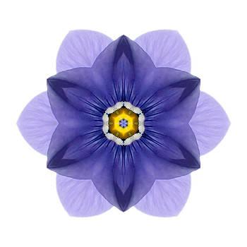 Blue Pansy I Flower Mandala White by David J Bookbinder