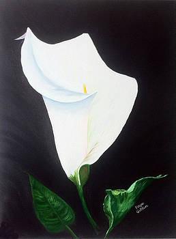 White Calla Lily by Faye Giblin