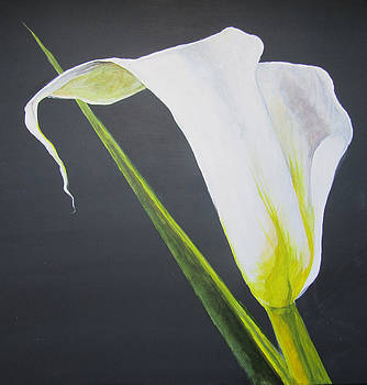 White Calla Lily by Louise Grant